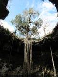 Cenote que se abre en el cielo en Yucatán México fotografía de archivo libre de regalías