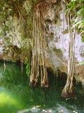 Cenote Riviera Maya jungle mayan Quintana Roo. Cenote lake in Riviera Maya jungle mayan Quintana Roo stock photos