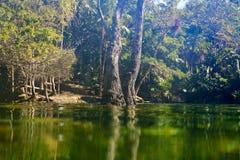 Cenote in Riviera Maya of Mayan Mexico Royalty Free Stock Photos