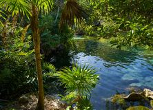 Cenote in Riviera Maya of Mayan Mexico Stock Photography