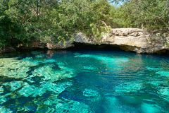 Cenote in Riviera Maya of Mayan Mexico. Sinkhole exposing groundwater Royalty Free Stock Photography