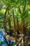Cenote in Riviera Maya of Mayan Mexico Royalty Free Stock Images