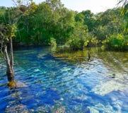 Cenote in Riviera Maya of Mayan Mexico Royalty Free Stock Image