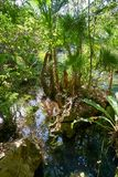 Cenote in Riviera Maya of Mayan Mexico Stock Photos