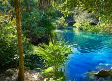 Cenote in Riviera Maya of Mayan Mexico. Sinkhole exposing groundwater Stock Photo