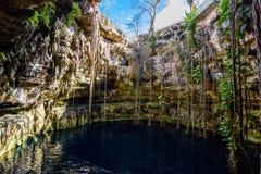 Cenote San Lorenzo Oxman cerca de Valladolid, Yucatán, México Swimm Imagen de archivo
