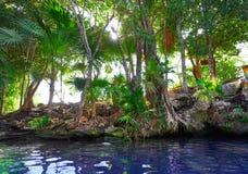Cenote sinkhole in Riviera Maya of Mexico. Cenote sinkhole in Riviera Maya at Mayan Mexico stock photo