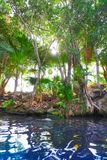 Cenote sinkhole in Riviera Maya of Mexico. Cenote sinkhole in Riviera Maya at Mayan Mexico stock photography