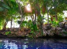Cenote sinkhole in Riviera Maya of Mexico. Cenote sinkhole in Riviera Maya at Mayan Mexico stock image