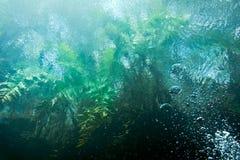 Cenote underwater Stock Images