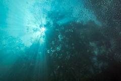 Cenote underwater Stock Photos