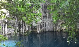 Cenote Yodzonot. Underground river in Yucatan Mexico Royalty Free Stock Images