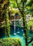 Cenote Zaci -巴里阿多里德,墨西哥 库存图片