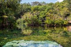 Cenotes Iucatão de México Fotos de Stock