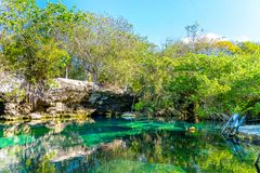 Cenotes, Riviera Maya. The unique and refreshing beauty of a cenote located in the Riviera Maya, Mexico stock image