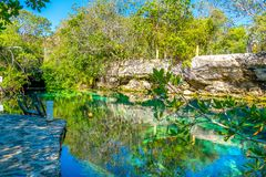 Cenotes, Riviera Maya. The unique and refreshing beauty of a cenote located in the Riviera Maya, Mexico stock images