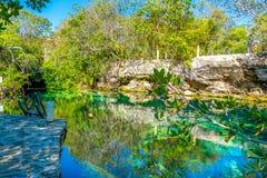 Cenotes, Riviera Maya stock images