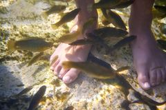 Cenotes Mexico fishes suck feet dead skin Stock Photo