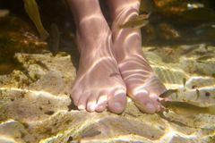 Cenotes Mexico fishes suck feet dead skin Stock Images