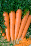 Cenoura Imagem de Stock