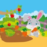 Cenoura de roedura do coelho no jardim Fotos de Stock Royalty Free