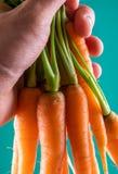 Cenoura fresca e doce em uma tabela de madeira cinzenta fotos de stock