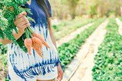 Cenoura fresca no jardim Fotografia de Stock