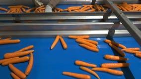 Cenoura na correia transportadora video estoque