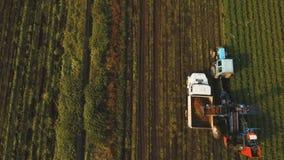 Cenoura que colhe no campo do ` s do fazendeiro Silhueta do homem de negócio Cowering video estoque