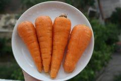 Cenoura suculenta alaranjada natural fresca brilhante no taretke contra o contexto do jardim Imagens de Stock Royalty Free
