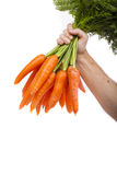 Cenouras à disposicão Imagens de Stock