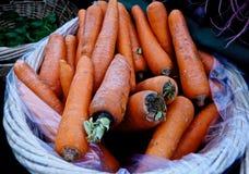 Cenouras Foto de Stock Royalty Free