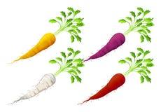 Cenouras ilustração stock