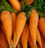 Cenouras Imagem de Stock