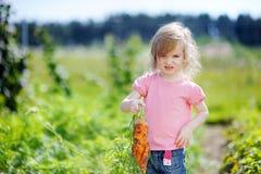 Cenouras adoráveis da colheita da menina em um jardim Imagem de Stock Royalty Free