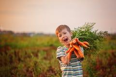 Cenouras adoráveis da colheita do menino da criança no jardim doméstico no por do sol foto de stock