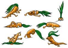 Cenouras ajustadas ilustração do vetor