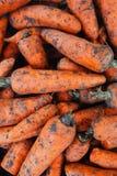 Cenouras, cenouras orgânicas frescas no mercado de produto fresco Imagens de Stock Royalty Free