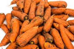 Cenouras colhidas frescas do jardim fotos de stock