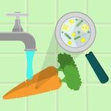 Cenouras contaminadas de lavagem ilustração do vetor