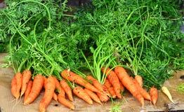 Cenouras do jardim fotos de stock
