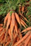 Cenouras do mercado dos fazendeiros Imagens de Stock Royalty Free