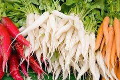 Cenouras do Radish Imagem de Stock Royalty Free