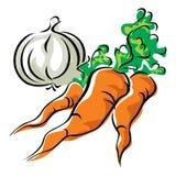 Cenouras e alho ilustração do vetor