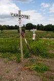 Cenouras e espinafres para escolher Fotografia de Stock Royalty Free