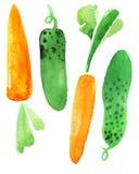 Cenouras e pepino Imagens de Stock