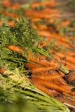 Cenouras escavadas Fotos de Stock