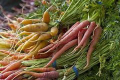 Cenouras escolhidas frescas Fotografia de Stock Royalty Free