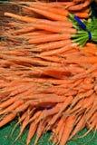 Cenouras escolhidas frescas Foto de Stock