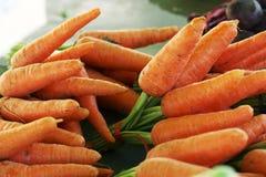 Cenouras frescas Foto de Stock Royalty Free
